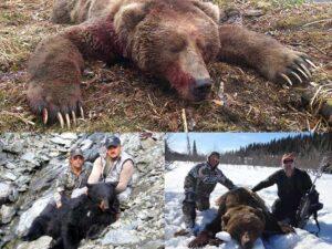 bear-gallery-alaska-challenge-guide-service