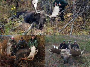 moose-gallery-alaska-challenge-guide-service